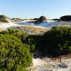 Grayton Beach State Park Dunes